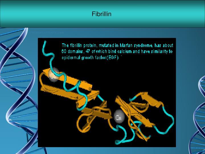Fibrillin