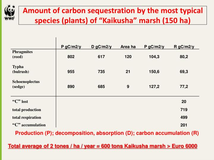 "Amount of carbon sequestration by the most typical species (plants) of ""Kaikusha"" marsh (150 ha)"