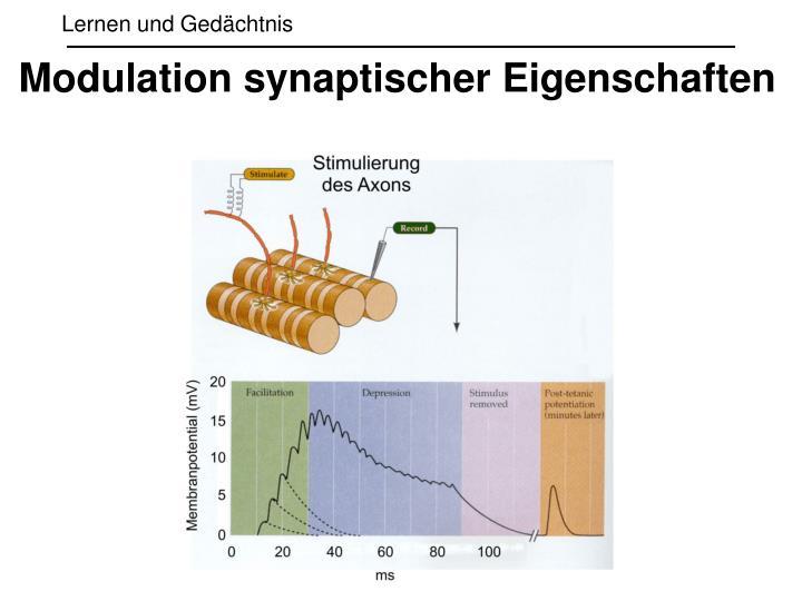 Modulation synaptischer Eigenschaften