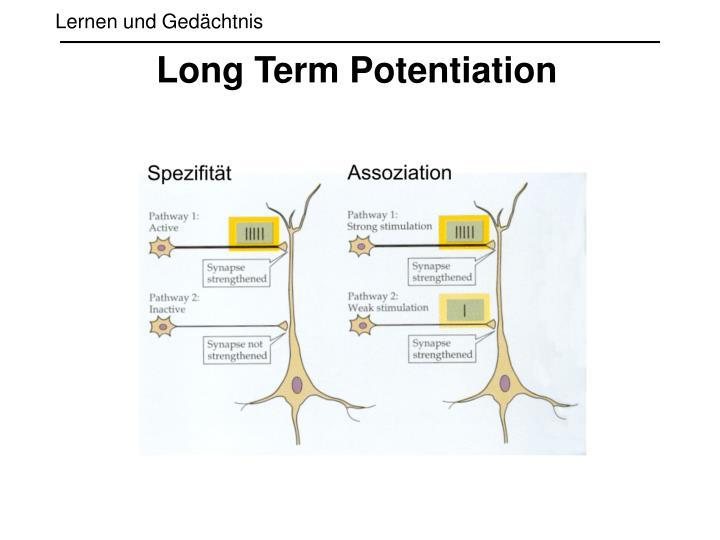 Long Term Potentiation