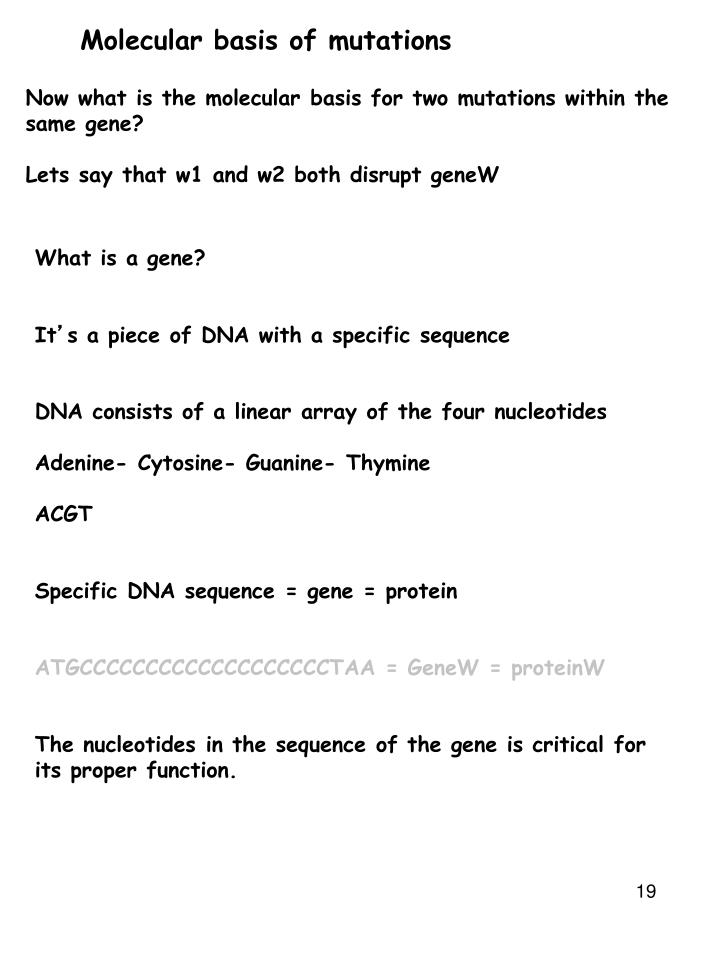 Molecular basis of mutations