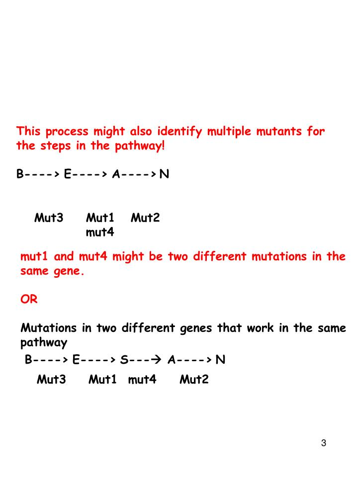 This process might also identify multiple mutants for the steps in the pathway!