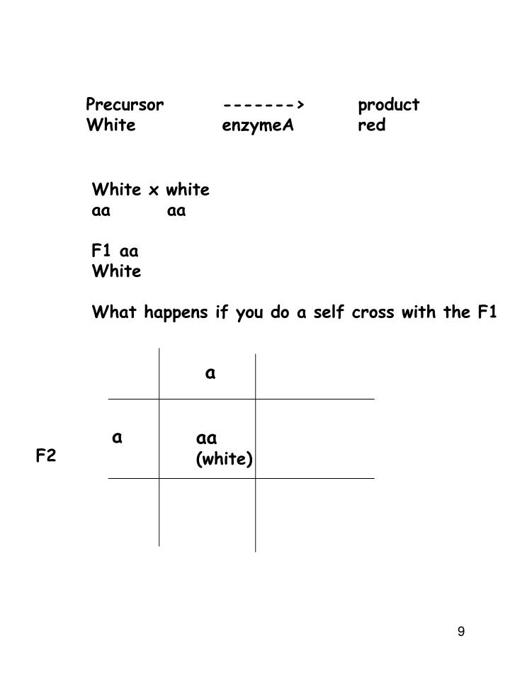 Precursor------->product