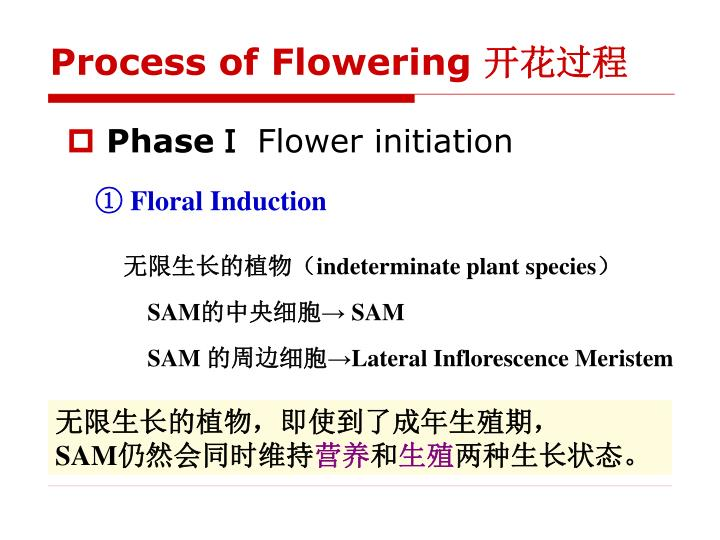 Process of Flowering