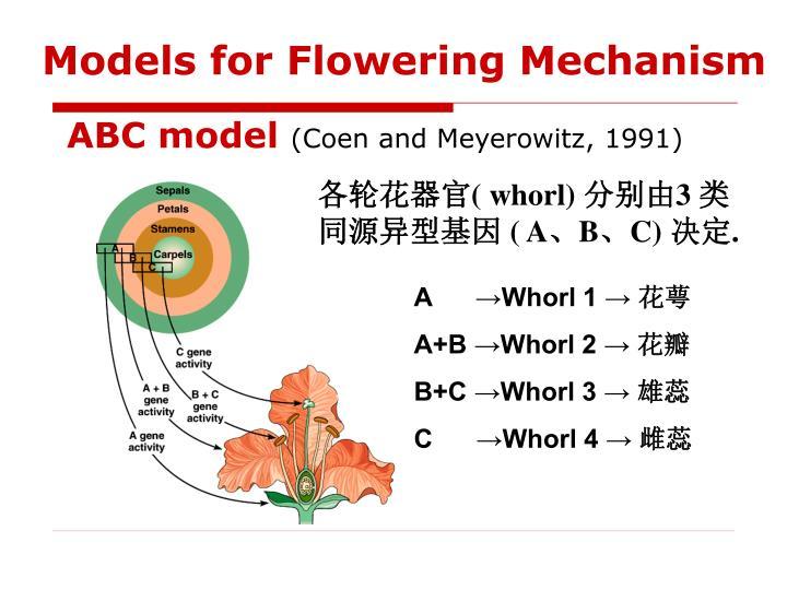 Models for Flowering Mechanism