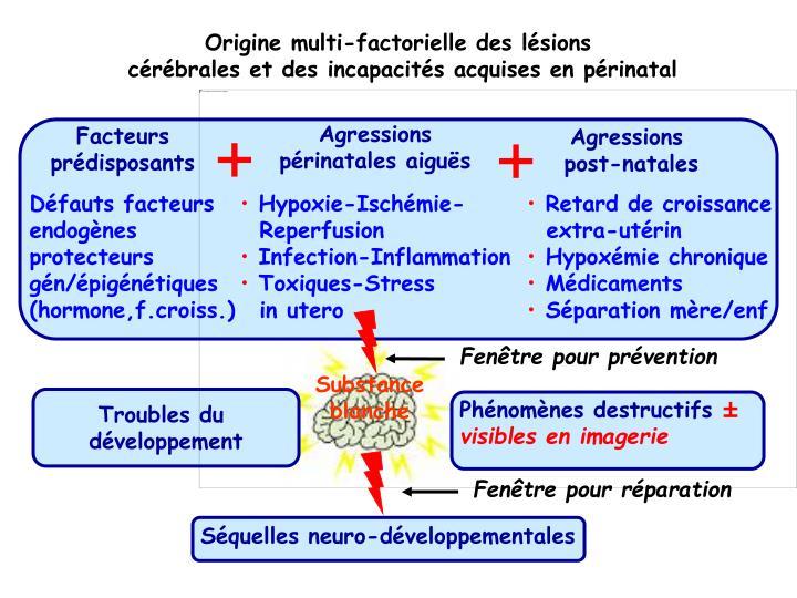 Origine multi-factorielle des lésions
