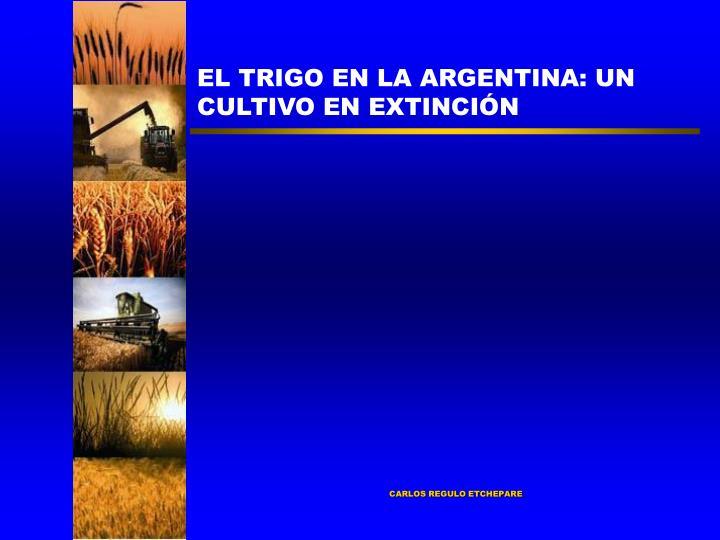 EL TRIGO EN LA ARGENTINA: UN CULTIVO EN EXTINCIÓN