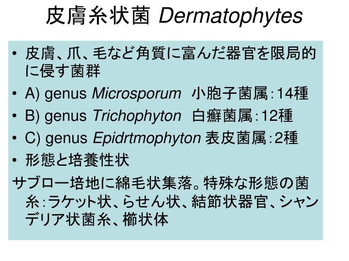皮膚糸状菌
