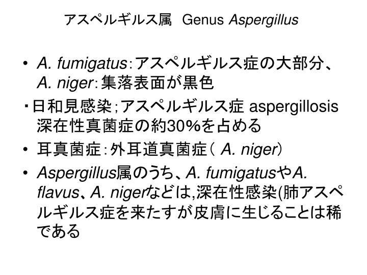 アスペルギルス属
