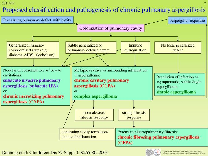 Proposed classification and pathogenesis of chronic pulmonary aspergillosis