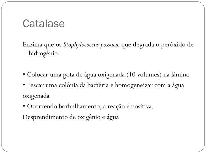 Catalase