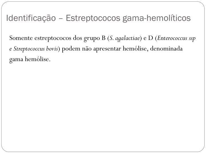 Identificação – Estreptococos