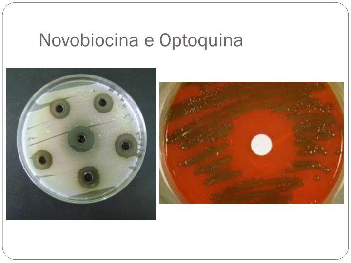 Novobiocina