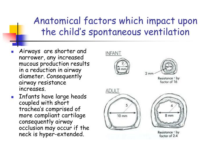 Anatomical factors which impact upon the child's spontaneous ventilation