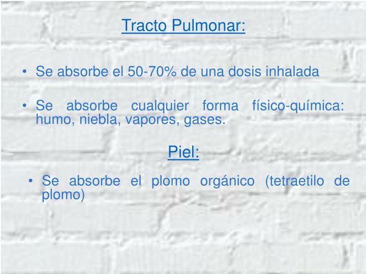 Tracto Pulmonar: