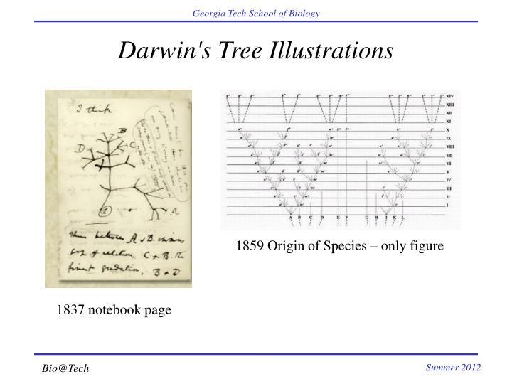 Darwin's Tree Illustrations