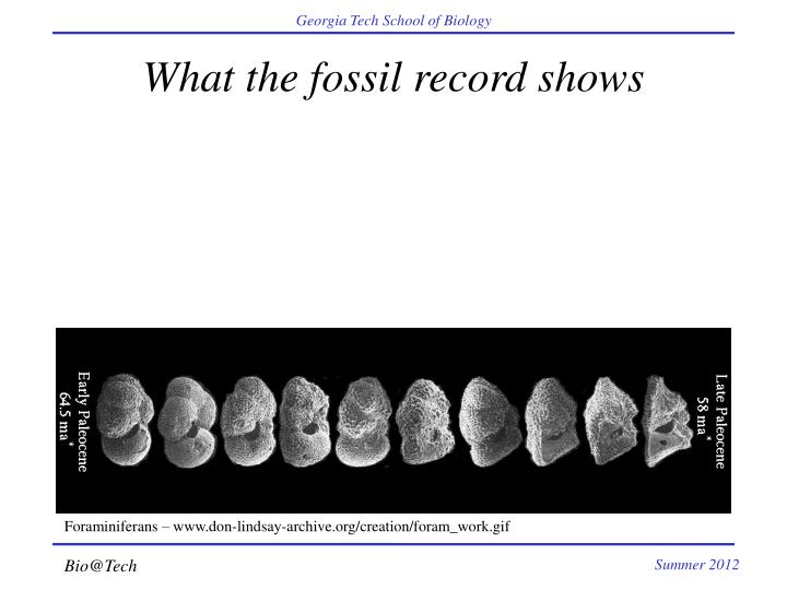 What the fossil record shows