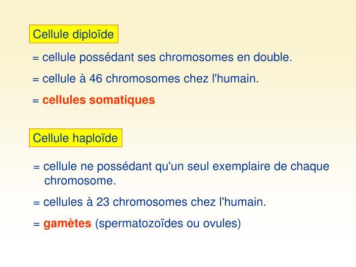 Cellule diploïde