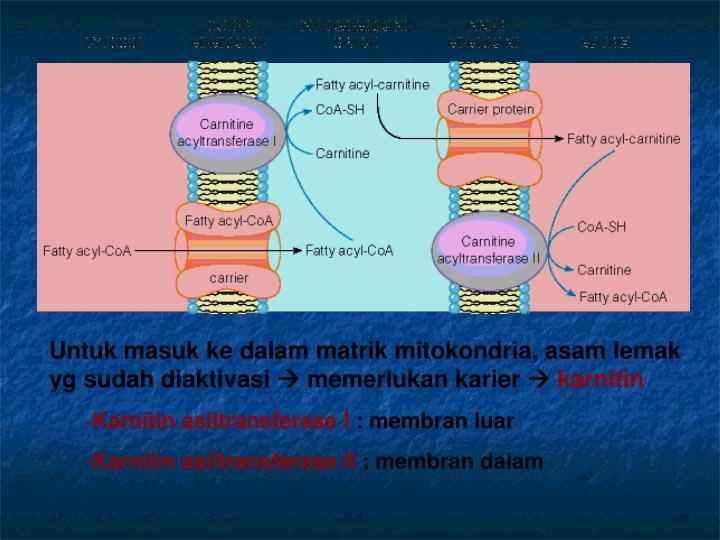 Untuk masuk ke dalam matrik mitokondria, asam lemak yg sudah diaktivasi