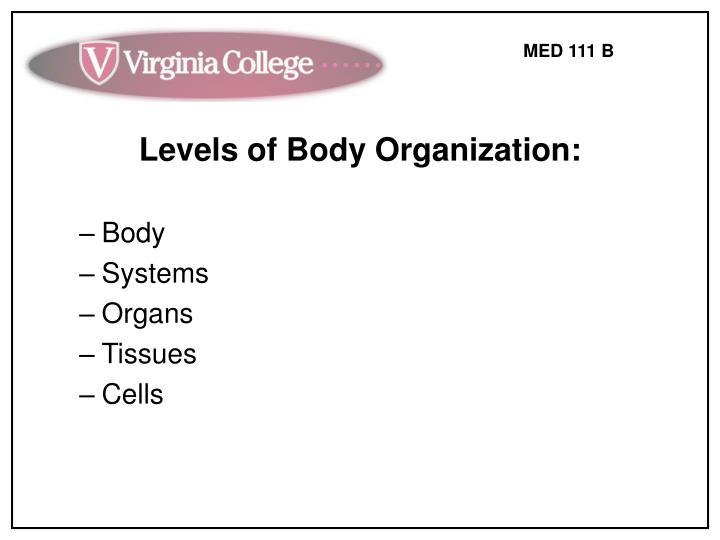 Levels of Body Organization: