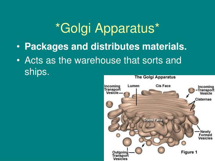 *Golgi Apparatus*