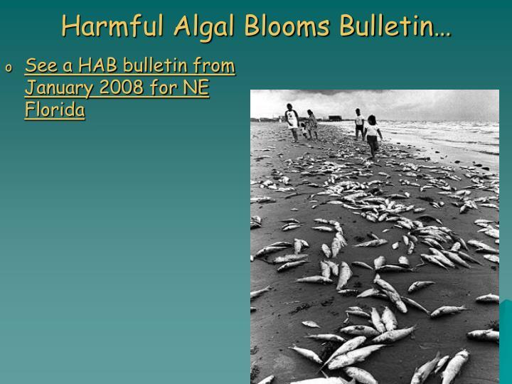 Harmful Algal Blooms Bulletin…