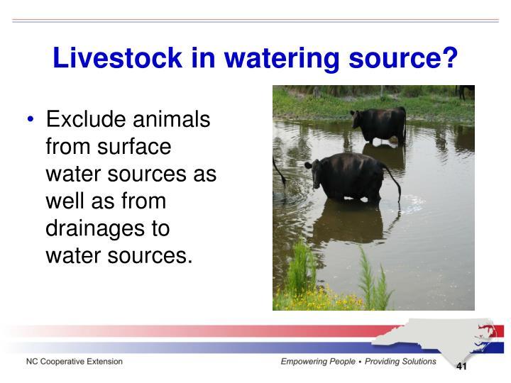 Livestock in watering source?
