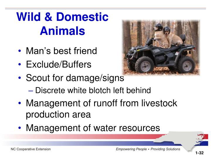 Wild & Domestic Animals