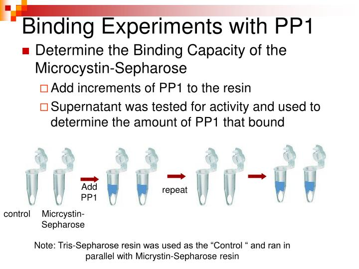 Binding Experiments with PP1