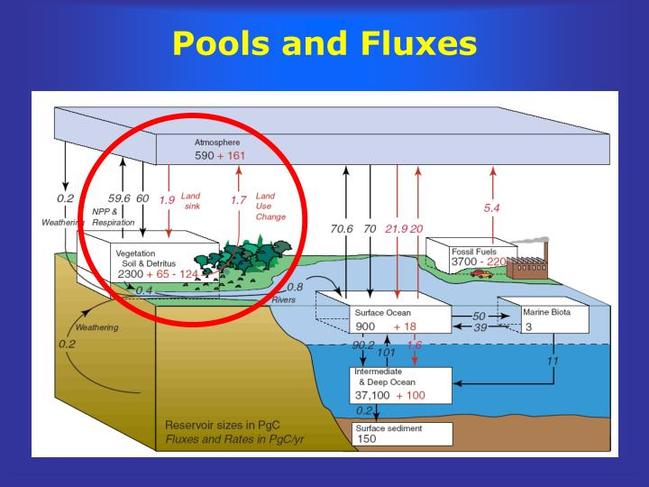 Pools and Fluxes