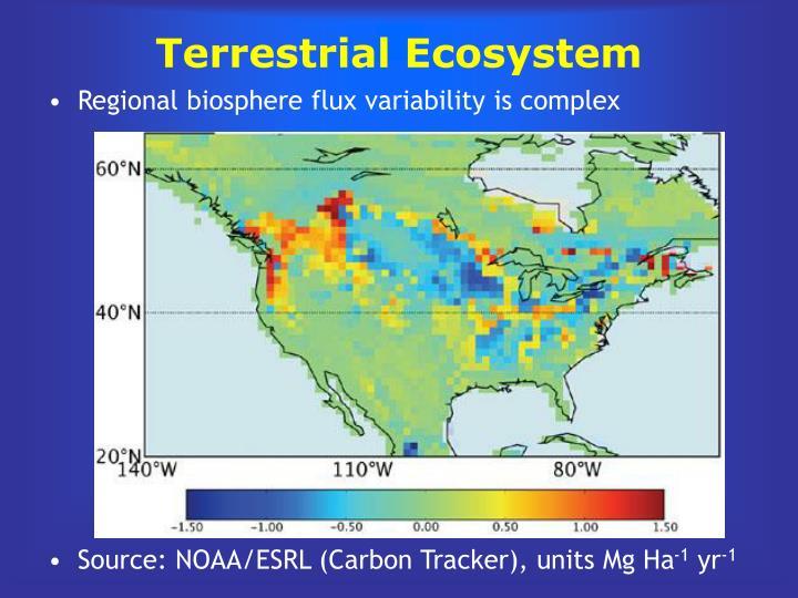Terrestrial Ecosystem