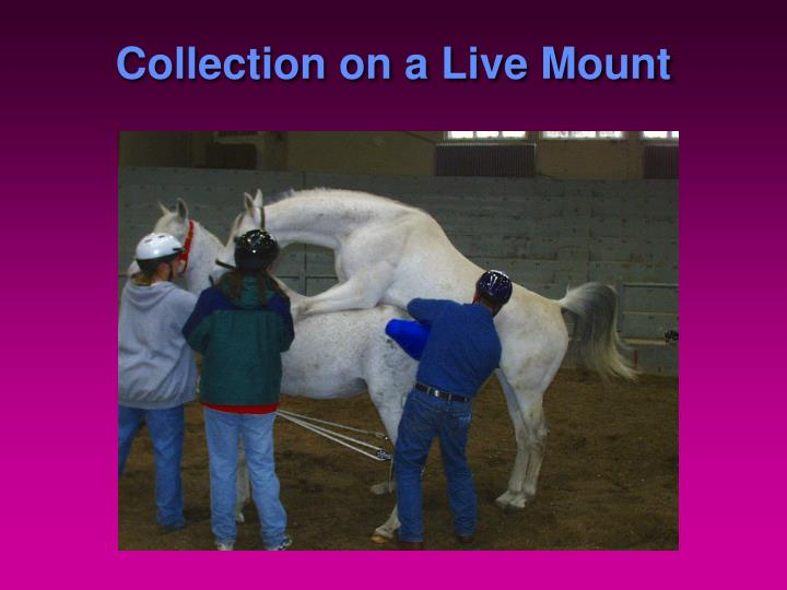 Collection on a Live Mount