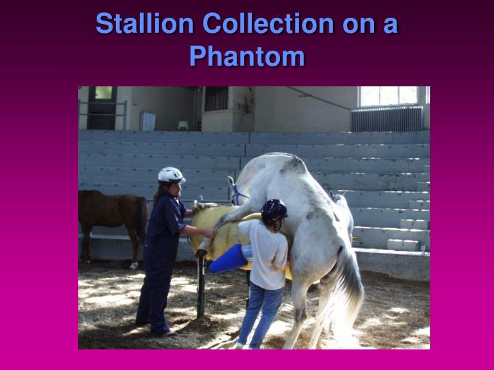Stallion Collection on a Phantom