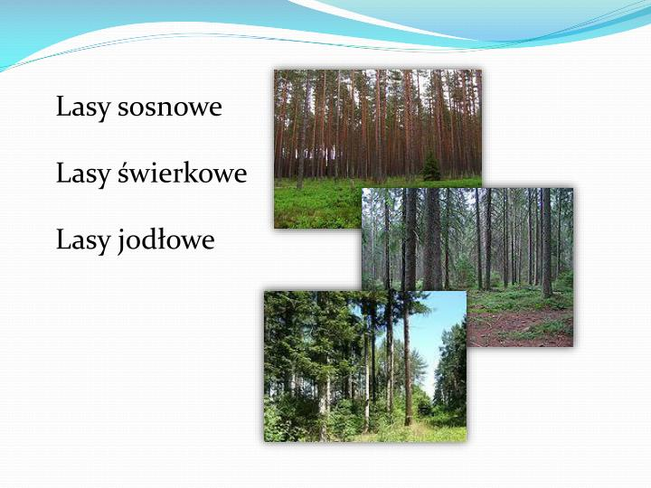Lasy sosnowe