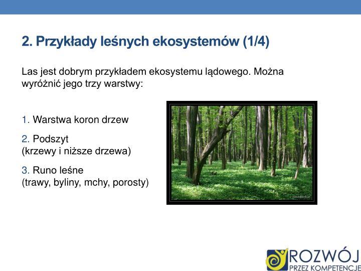 2. Przykłady leśnych ekosystemów (1/4)
