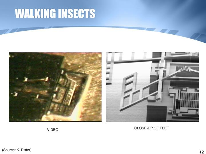 WALKING INSECTS