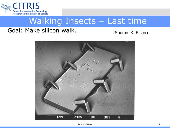 Walking Insects – Last time