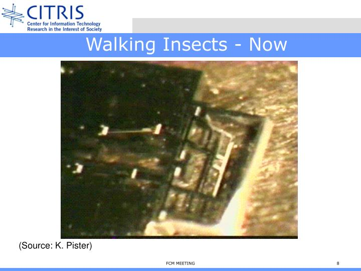 Walking Insects - Now