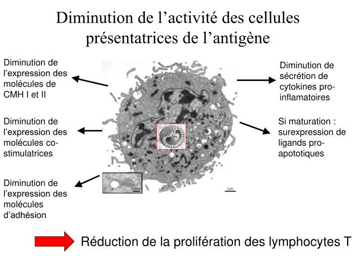Diminution de l'activité des cellules présentatrices de l'antigène
