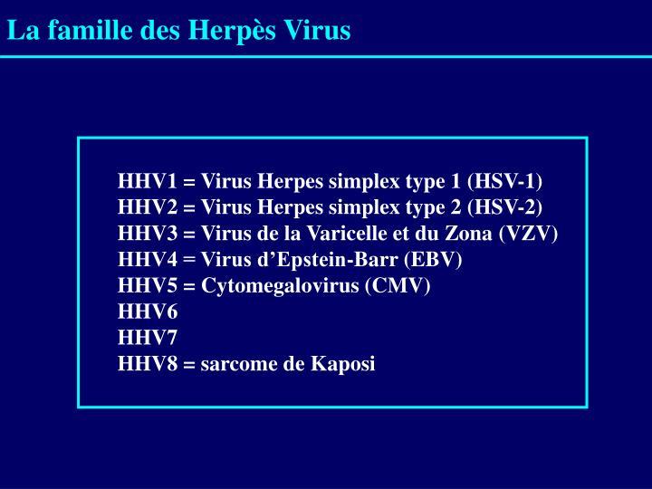 La famille des Herpès Virus