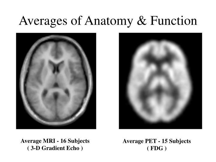 Averages of Anatomy & Function