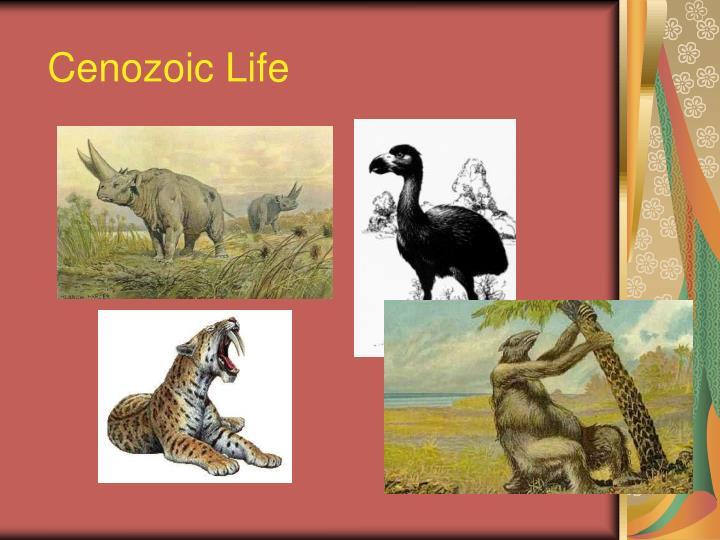 Cenozoic Life