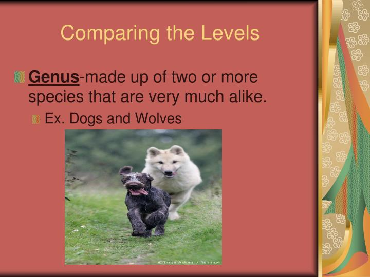 Comparing the Levels