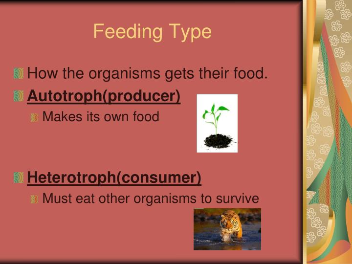 Feeding Type