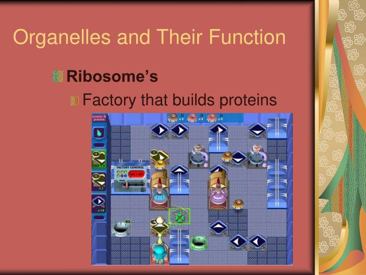 Organelles and Their Function