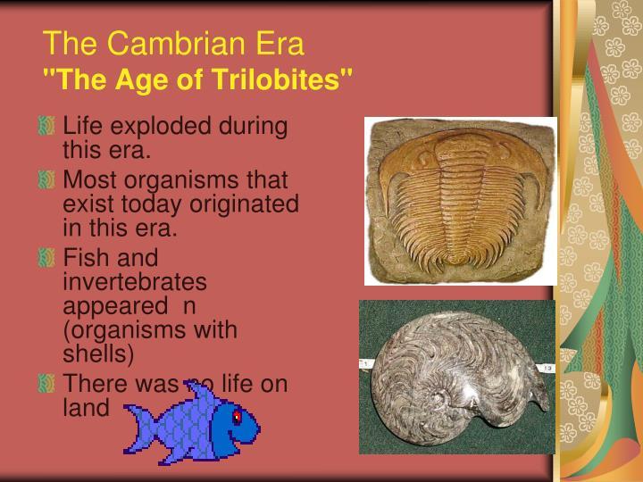 The Cambrian