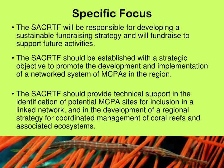 Specific Focus