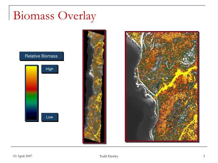 Relative Biomass