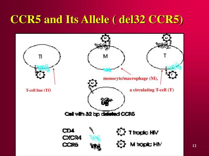 CCR5 and Its Allele ( del32 CCR5)