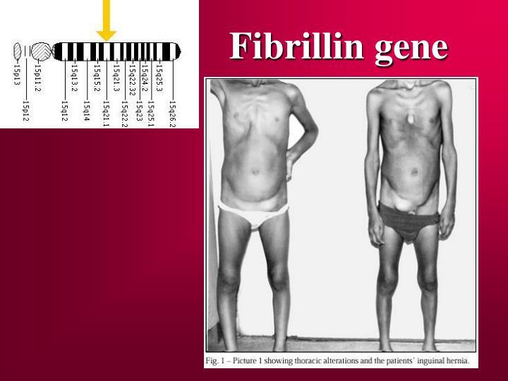 Fibrillin gene